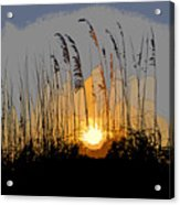Sea Oats At Sunset Acrylic Print