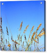 Sea Oats Atlantic Ocean Acrylic Print