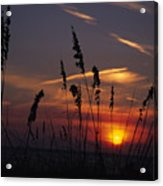 Sea Oats Blow In The Breeze As The Sun Acrylic Print