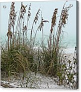 Sea Oats In Light Fog Acrylic Print