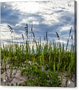Sea Oats Sand Dune Sky Acrylic Print