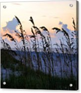 Sea Oats Silhouette Acrylic Print by Kristin Elmquist