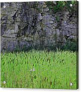Sea Of Cattails Acrylic Print