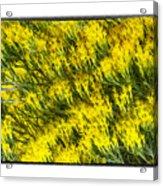 Sea Of Yellow Acrylic Print