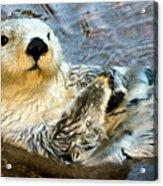 Sea Otter Portrait Acrylic Print