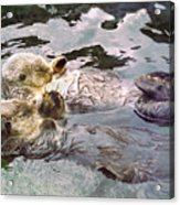 Sea Otters Holding Hands Acrylic Print by BuffaloWorks Photography