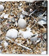 Sea Ribbons And Shells Acrylic Print