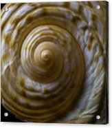 Sea Shell Beauty Acrylic Print