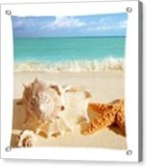 Sea Shell Seashell Clam Beach Decorative Square Zippered Throw Pillow Acrylic Print