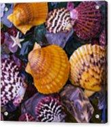 Sea Shells And Sea Glass Acrylic Print