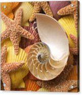 Sea Shells And Starfish Acrylic Print by Garry Gay
