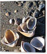 Sea Shells At Folly Beach In Charleston Sc Acrylic Print