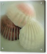 Sea Shells From The Sea Shore Acrylic Print