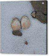 Sea Shells In Snow Acrylic Print