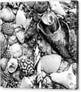 Sea Shells - Nassau, Bahamas Acrylic Print