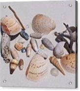Sea Shells On White Sand Acrylic Print