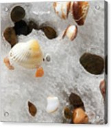 Sea Shells Rocks And Ice Acrylic Print