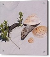 Sea Shells With Drift Wood And Small Plants Acrylic Print