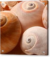 Sea Spirals Acrylic Print by Barbara  White