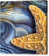 Sea Star Abstract Acrylic Print