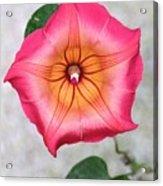 Sea Star Flower Acrylic Print