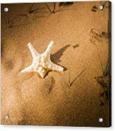 Sea Star Scene Acrylic Print