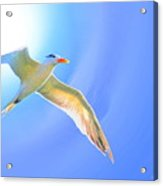 Sea Tern If I Were A Bird Acrylic Print