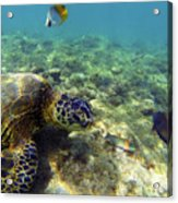 Sea Turtle #1 Acrylic Print