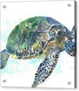 Sea Turtle #20 Acrylic Print