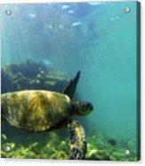 Sea Turtle #5 Acrylic Print