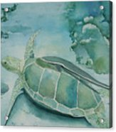Sea Turtle And Friend Acrylic Print