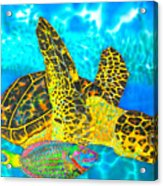 Sea Turtle And Parrotfish Acrylic Print