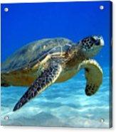 Sea Turtle Blue Acrylic Print