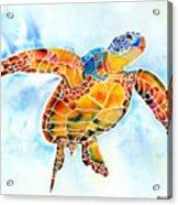 Sea Turtle Gentle Giant Acrylic Print