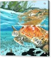 Sea Turtles Acrylic Print