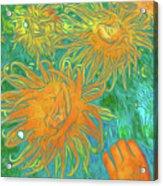 Sea Urchin 10 Acrylic Print