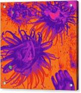 Sea Urchin 14 Acrylic Print