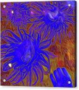 Sea Urchin 9 Acrylic Print