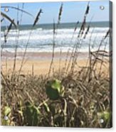 Seagrass Acrylic Print