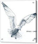 Seagull - Landing Acrylic Print