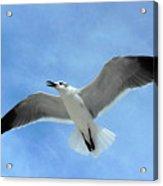 Seagull #1 Acrylic Print