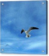 Seagull #5 Acrylic Print