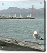 Seagull And Golden Gate Bridge Acrylic Print
