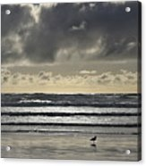 Seagull At Cannon Beach Acrylic Print