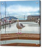 Seagull At Pier 39 Acrylic Print