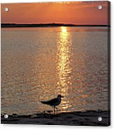 Seagull At Sunset Acrylic Print