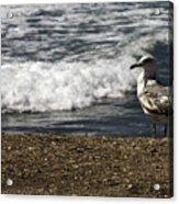 Seagull At The Beach Acrylic Print