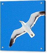 Seagull Blue Acrylic Print by Cesar Marino
