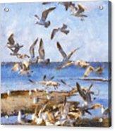 Seagull Convention Acrylic Print