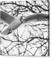 Seagull Fly By Trees Acrylic Print